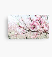 Peach Blossoms 17 Canvas Print