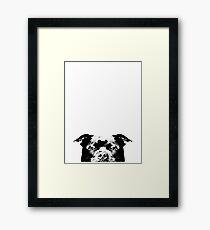 Staffordshire Bull Terrier Dog Framed Print