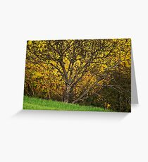 When spring shines Greeting Card