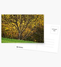 When spring shines Postcards