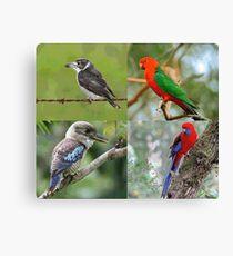 Native Birds Of Australia Canvas Print