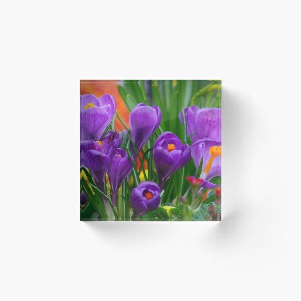 Spring Beauties Acrylic Block