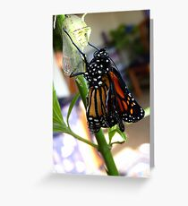 Walk The Line! - Monnarch Butterfly - NZ Greeting Card