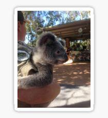 Koala Me Crazy  Sticker