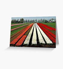 Tulip delight Greeting Card