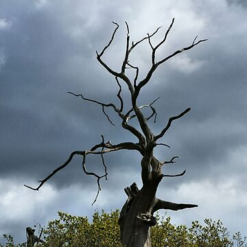 Winding Tree in Sherwood Forest by chihuahuashower