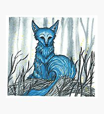 Mysterious blue wolf Photographic Print