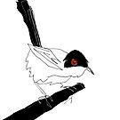Warbler by Matt Mawson