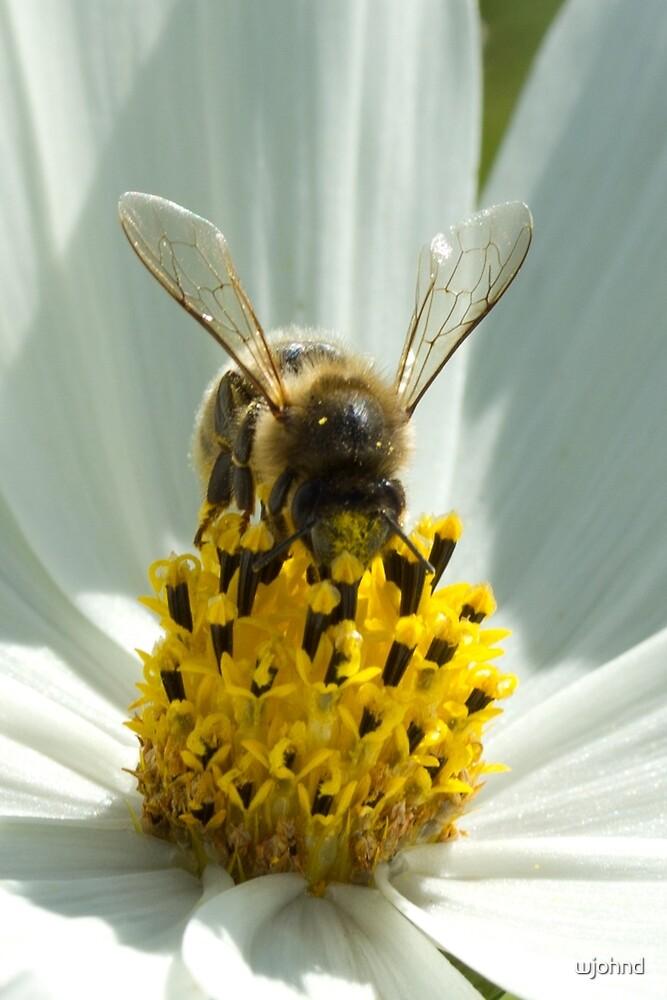 Honey Bee by wjohnd