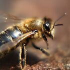Italian Honeybee Hard At Work by Laura Puglia