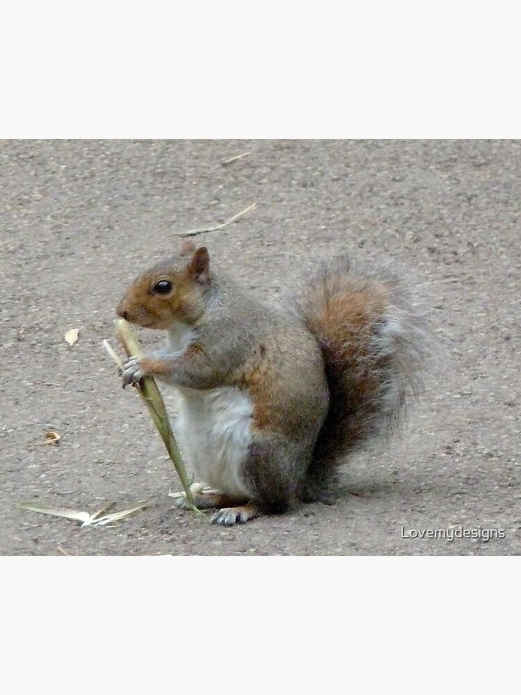 Squirrel. Kew gardens. London by Lovemydesigns