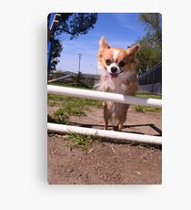 jumping the fence Canvas Print