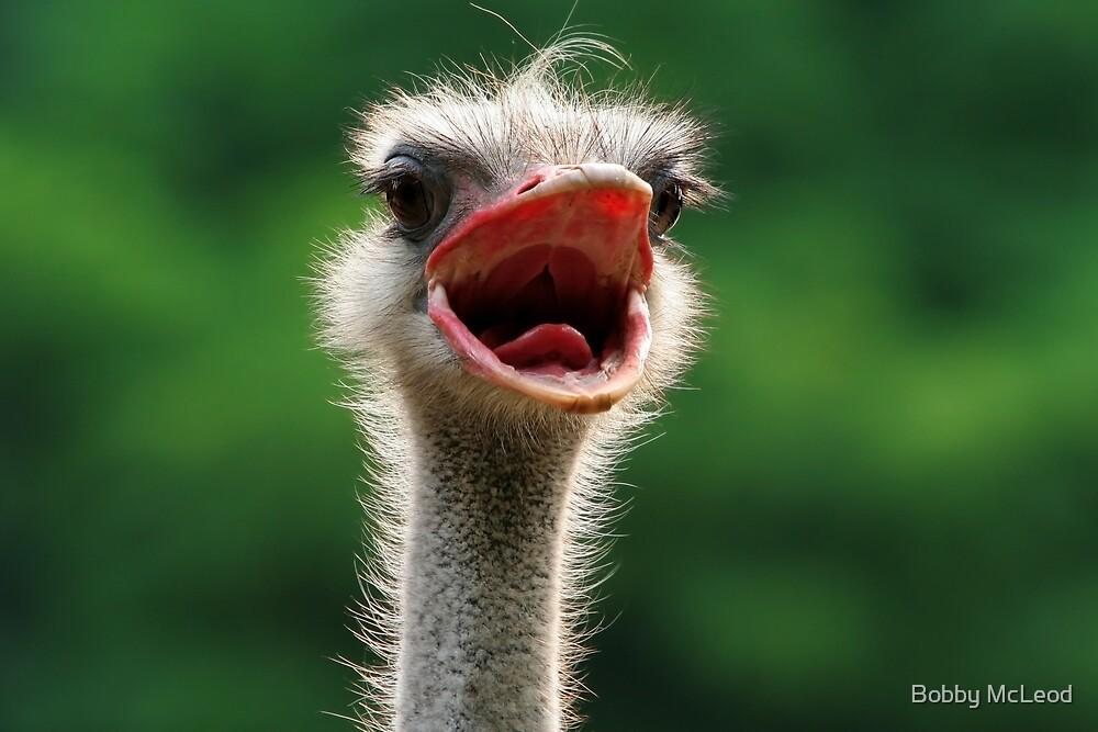 Say 'Aaaahhhh' by Bobby McLeod