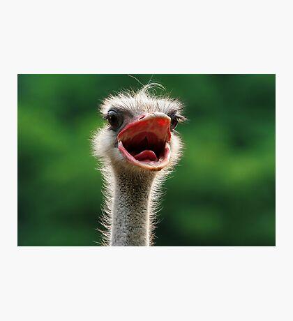 Say 'Aaaahhhh' Photographic Print