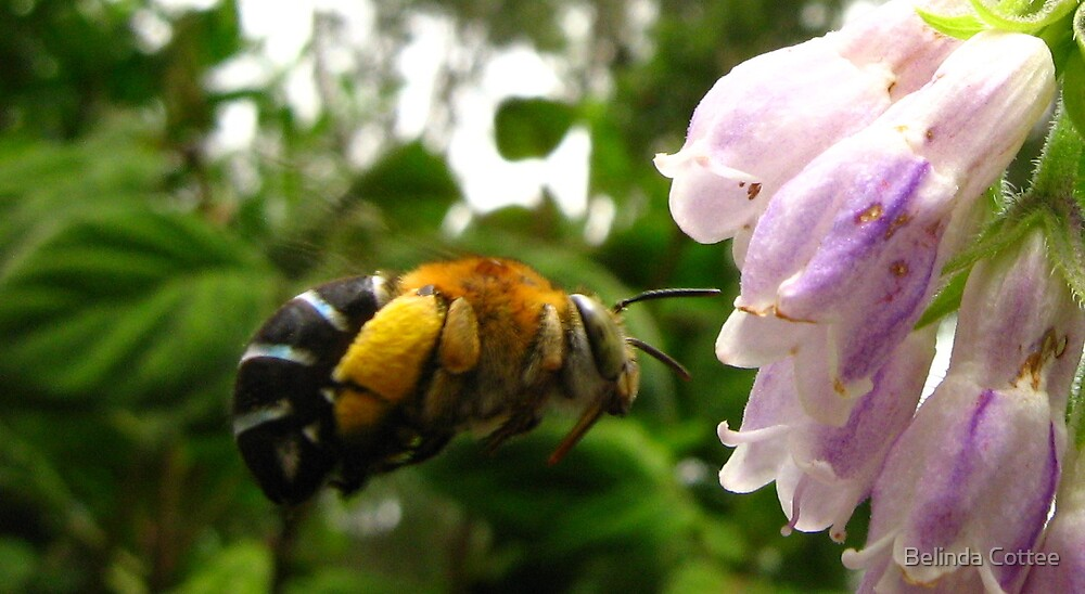 busy bumble 2 by Belinda Cottee