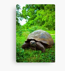 Galapagos wildlife. Canvas Print