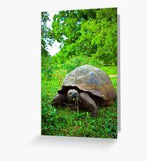 Galapagos wildlife. Greeting Card