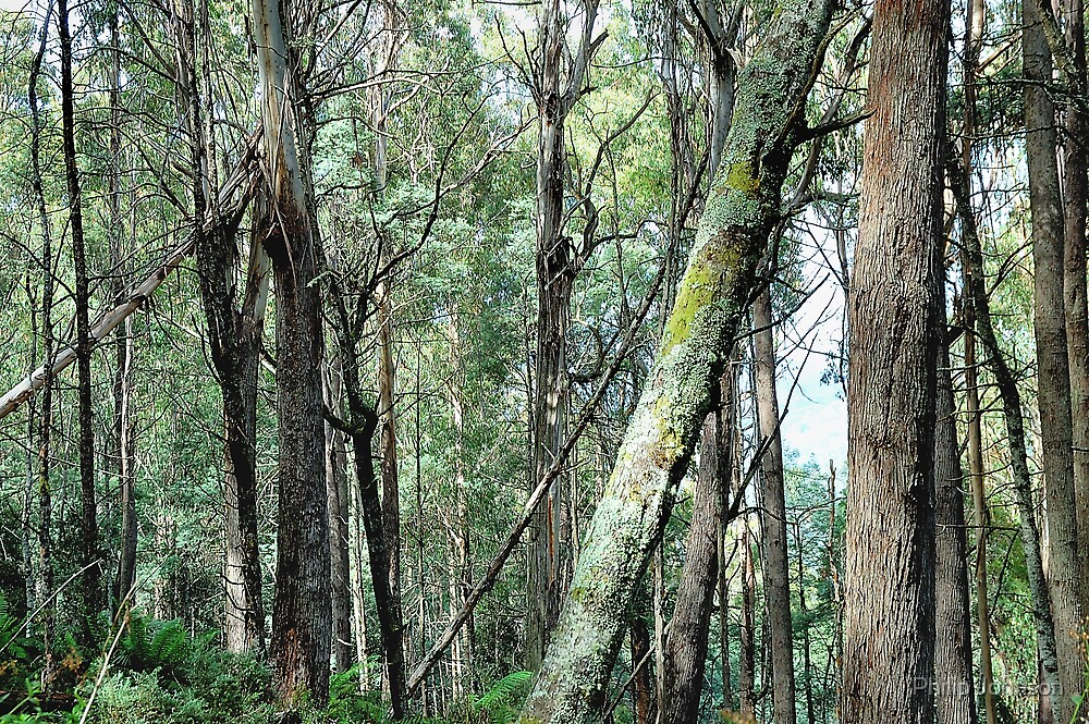I Need Your Support - Yarra Ranges National Park , Marysville Victoria Australia by Philip Johnson