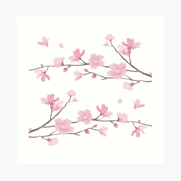 Flor de cerezo - fondo transparente Lámina artística