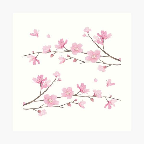 Cherry Blossom - Transparent Background Art Print
