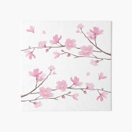 Cherry Blossom - Transparent Background Art Board Print