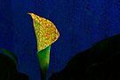 Calla Lily In Cracked Paint by Larry Costales