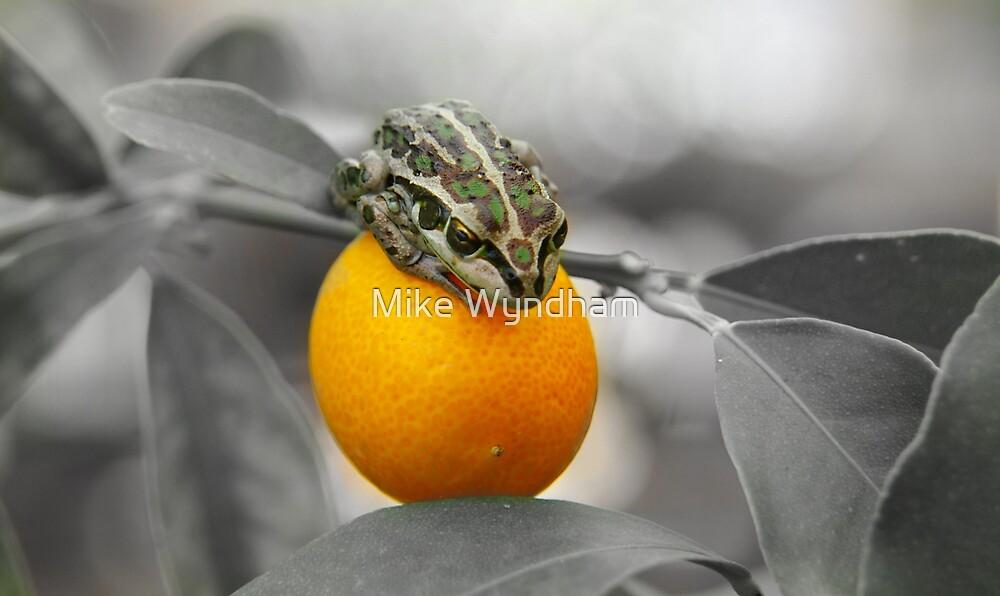 Frog on a Kumquat by Mike Wyndham