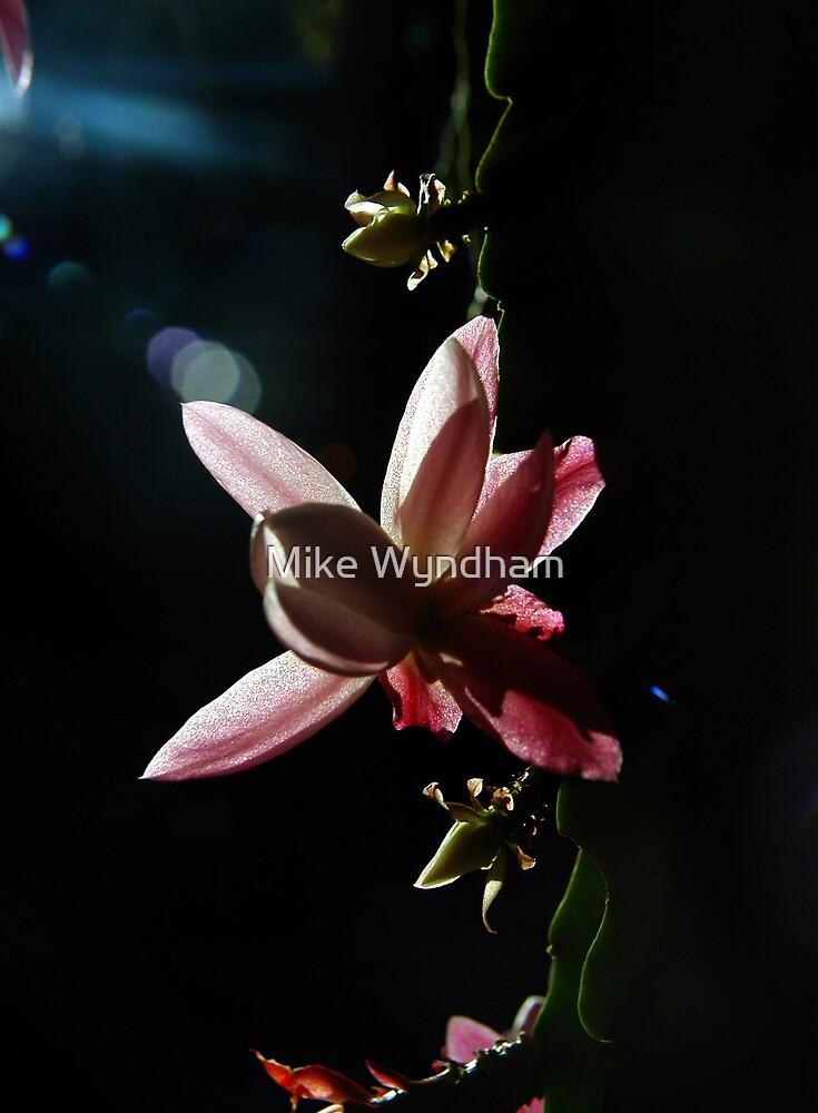 Cactus flower by Mike Wyndham