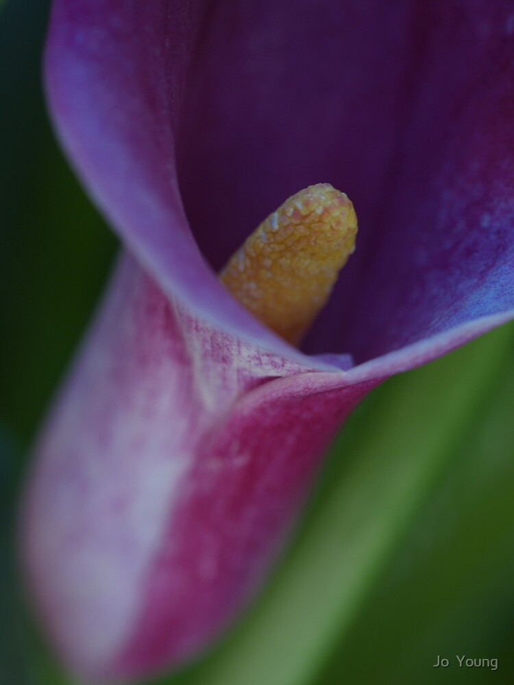 Lily 2 by Jo  Young