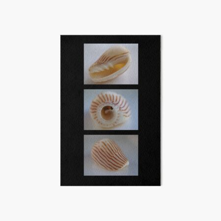 Shell Trio Art Board Print
