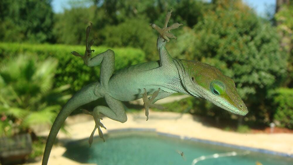 Lizard Looking by Rick Paddock