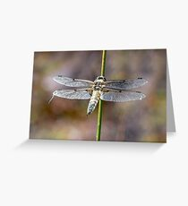 Dragonfly : The Four-Spotted Chaser Greeting Card