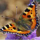 Butterfly In My Garden by lezvee