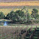 Beautiful Healesville Victoria Australia by Joy Watson