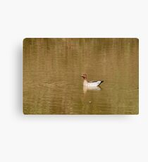 DUCK ON THE DAM Canvas Print