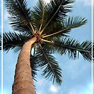 Florida Palm by dominick