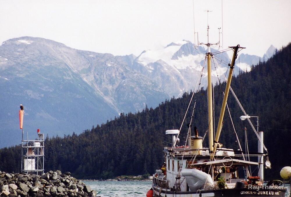 Alaska Bald Eagle by Ray Thacker