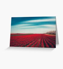 1000001 TULIPS Greeting Card