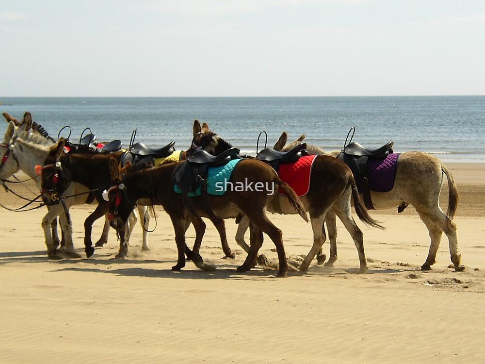 Beach Donkeys by shakey