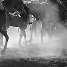 Horses, dust and sunlight by Penny Kittel