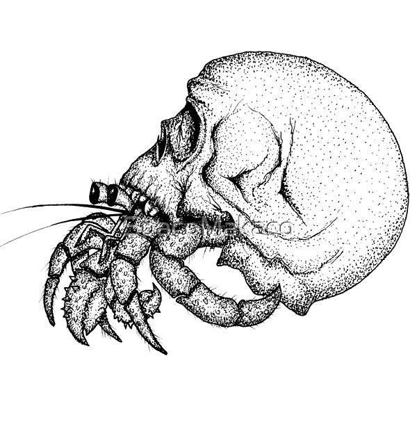 Skull Hermit Crab by SpacoMakaco