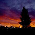 Sunset Pine by Penny Kittel