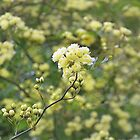 Mass of Tiny Yellow Tiny Roses...... Dorset UK by lynn carter
