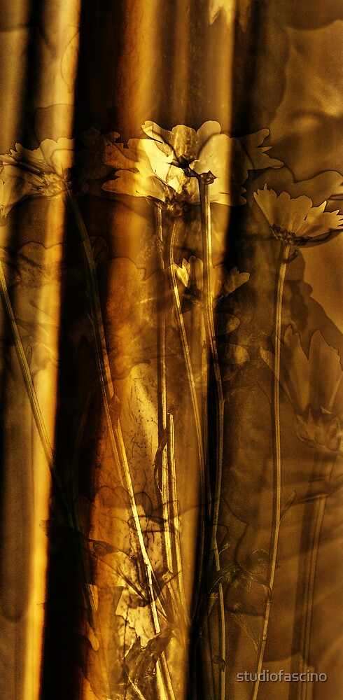 curtain and daisy by studiofascino