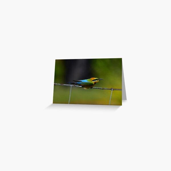 Headwind (Rainbow Bee Eater) Greeting Card
