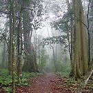 Misty path by Penny Kittel