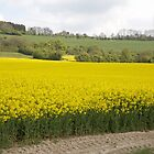 Blue skies over a Rapeseed Field in Westerham Kent by Keith Larby