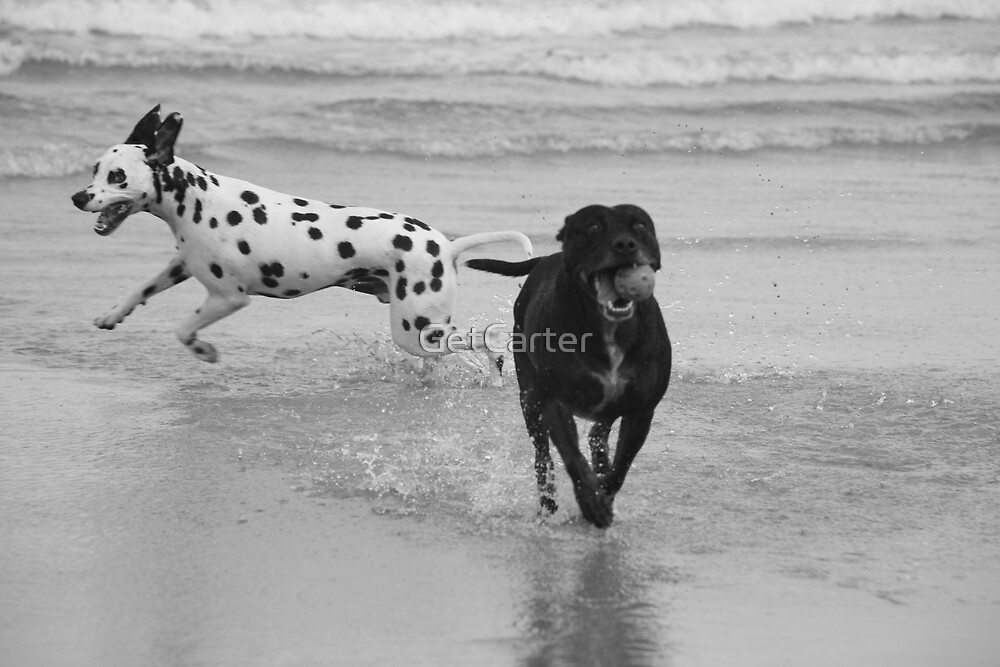Dogs Life 3 by GetCarter