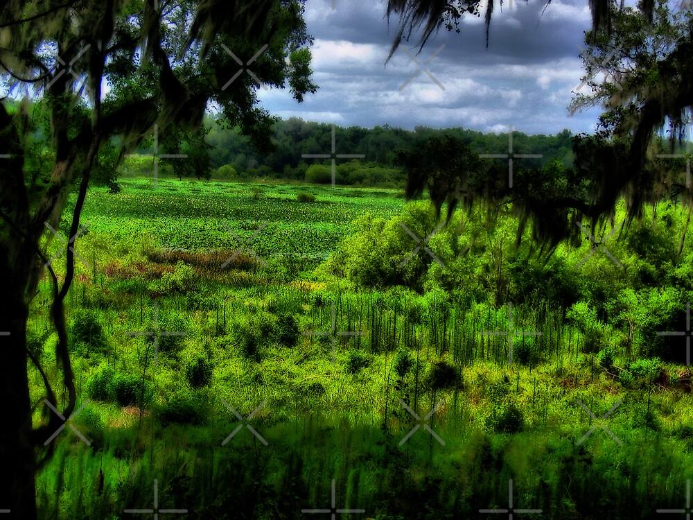 Lake of Grass by photorolandi