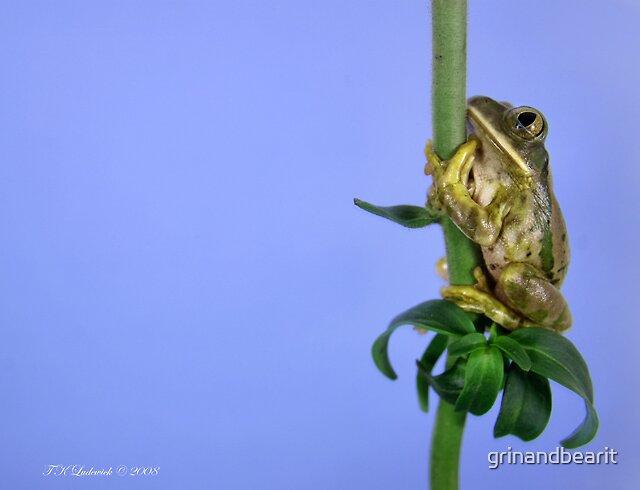Kermit & the Beanstalk by grinandbearit